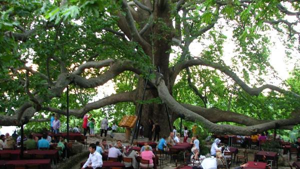 الشجرة التاريخية